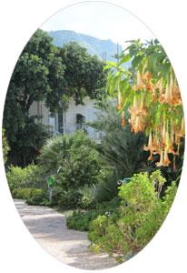 Klima auf Ischia